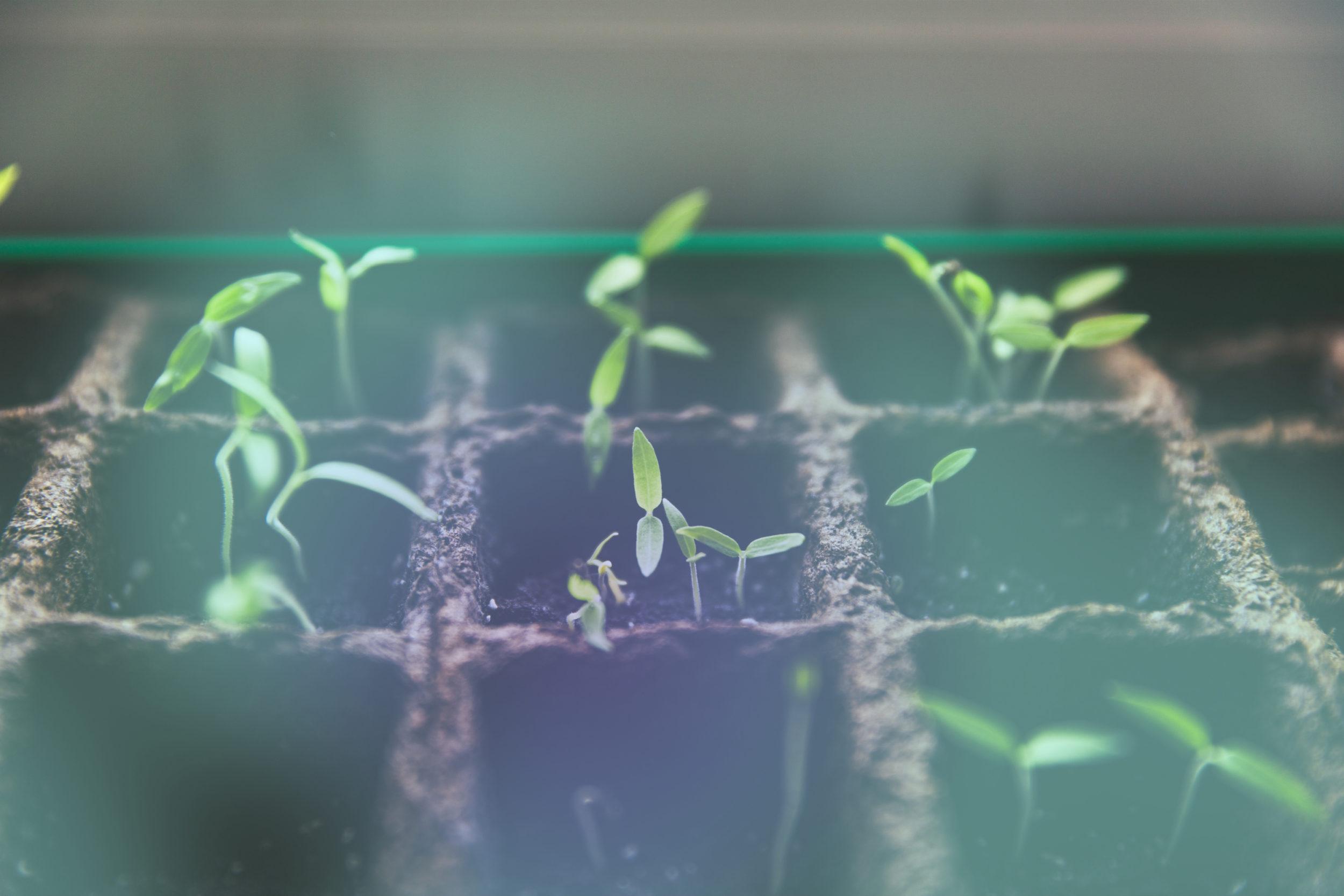 Wachstum kleiner Pflanzen