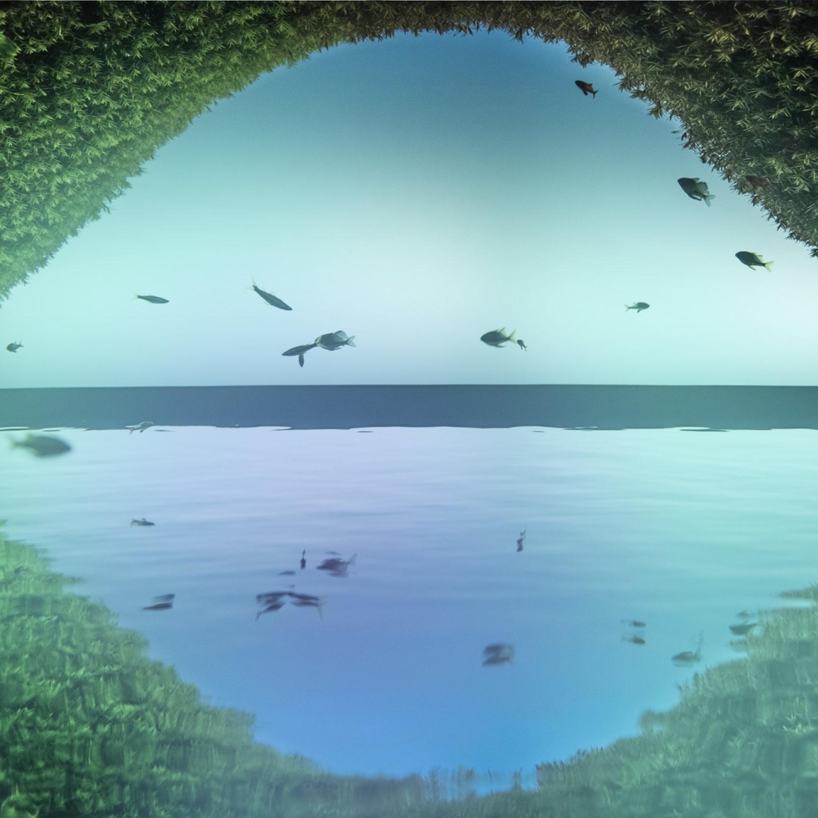 SAP Frontendtools Spiegelung eines Aquariums